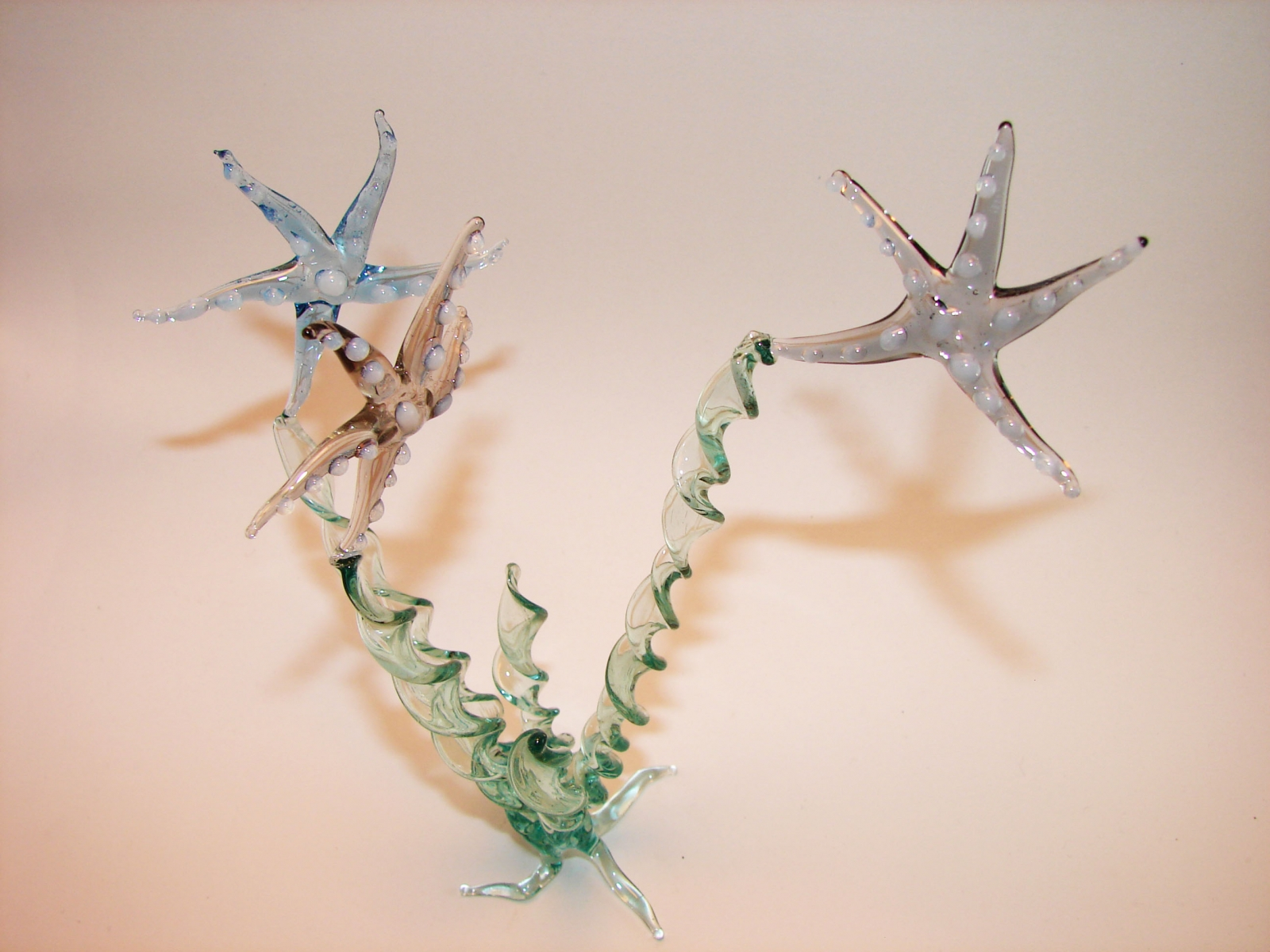 deniz-yıldızı_2